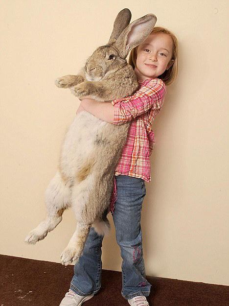 girl-holding-giant-bunny