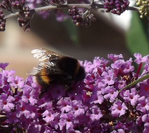Bees are localised, sustainable and self reliant, something humanity will learn the hard way.
